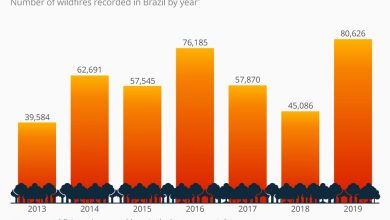 عدد قياسي من حرائق الغابات في الأمازون