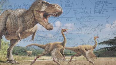 Photo of هل الرياضيات اختراع أم اكتشاف؟ سابقة أم لاحقة للوجود الإنساني!